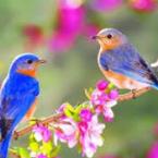 Il Santo Vangelo del Giorno giovedì 23 maggio 2019 (2026) A.D. – Con l'Amore e la Devozione Dovuti a Colui Ch'E' Tornato tra noi nel Nome del Padre!